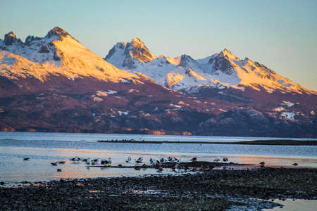 Landscape of mountains with their snowy peaks next to a group of seagulls in the lake Фото со стока
