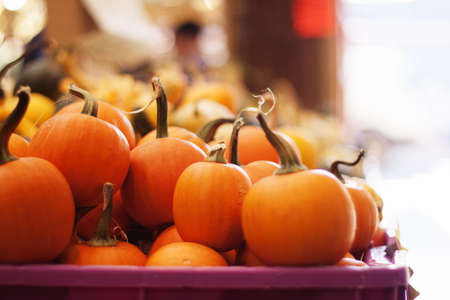 baby pumpkins at granville island market Stock Photo - 15676452