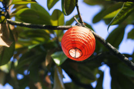 paper orange lantern in tree photo