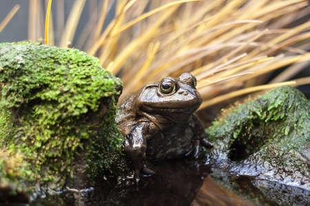 이끼 낀 바위 옆에있는 두꺼비 스톡 콘텐츠 - 16147988