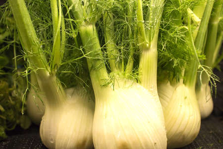 fresh fennel at the market Stock Photo - 17082696
