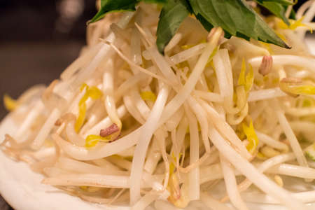 bean sprouts: some bean sprouts on plate