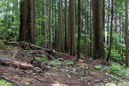 the woods on grouse mountain Reklamní fotografie