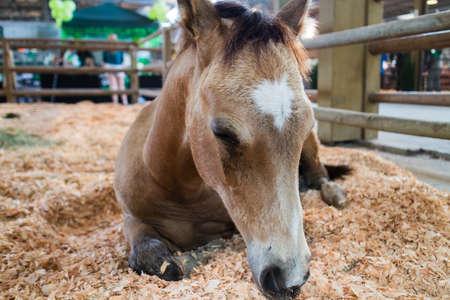 a cute foal in enclosure-asleep