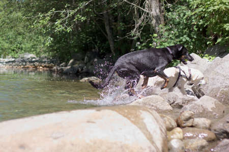 shootings: dogs leaving the creek