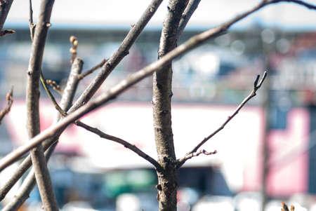 dockside: bare branches dockside