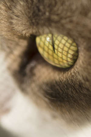 Closeup of cat eye with window greed reflection