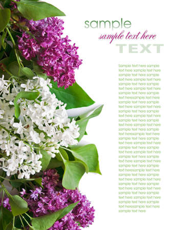 Lilac branch isolated on white background Stock Photo - 11747024