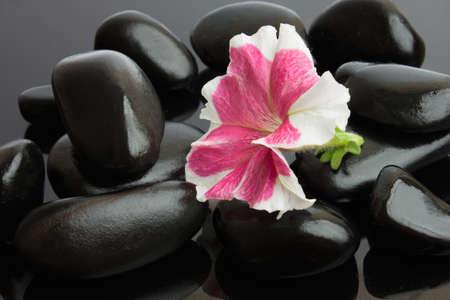 Spa con piedras negras y flor