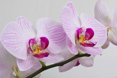 Flowers orchids in a greenhouse for decoration photo