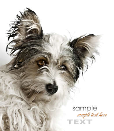 kindly: cute dog with kindly eyes Stock Photo