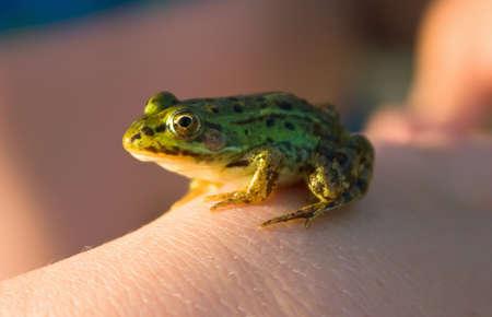 croak: Little frog in his hand