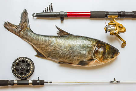 fish with rods and tackle for fishing photo