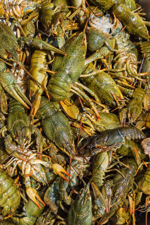 Background of the heap of live crawfish Stock Photo - 14600286