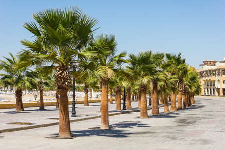 Promenade with palm trees on the shore of the Red Sea, Egypt, Hurghada