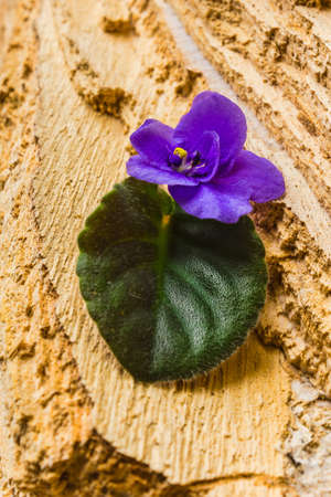 Flower with leaves on wooden background photo