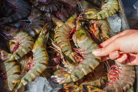 shrimp and other seafood on ice at a market in Thailand photo