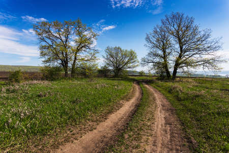 Country ground road in summer sunny day photo