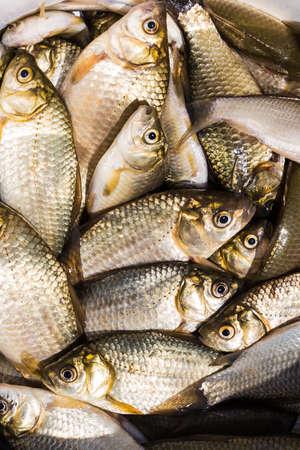 karausche: Hintergrund der kleinen Fische gefangen im Fluss Karausche Lizenzfreie Bilder