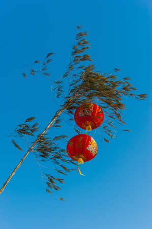 new year s eve: Chinese lanterns in a tree against the sky