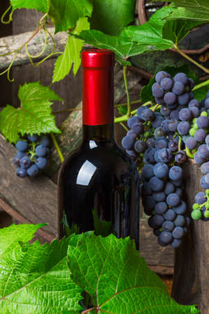 A bottle of red wine on the background of dark grapes photo