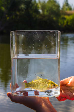 liberator: Small fish in a glass jar on the background of the lake