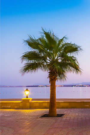 Promenade with palm trees on the shore of the Red Sea, Egypt, Hurghada photo