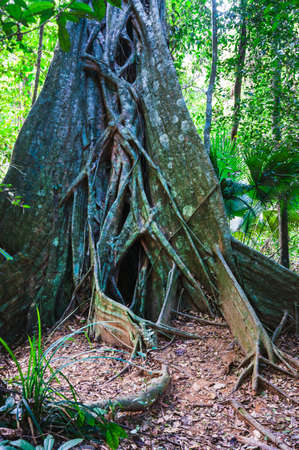south east: tropical jungles of South East Asia. Thailand
