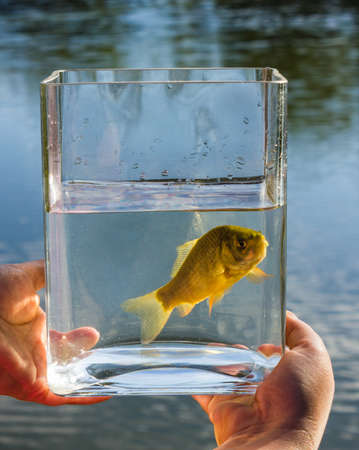 the liberator: Small fish in a glass jar on the background of the lake