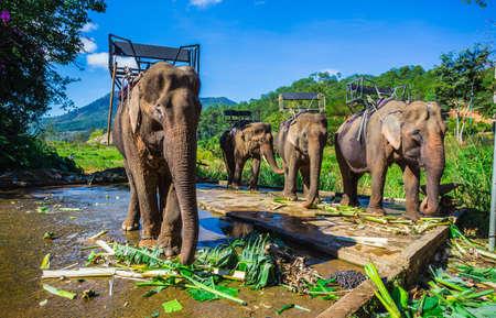 dalat: the farm of elephants not far from Dalat. Vietnam Stock Photo