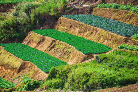 tourism  city: Vegetable fields and Housein highland, Dalat, Vietnam. Da lat is one of the best tourism city in Vietnam. Dalat city is Vietnams largest vegetable and flowers growing areas. Stock Photo
