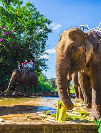 dalat: Dalat. Vietnam. 27.11.2014. The farm of elephants not far from Dalat.