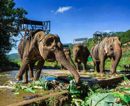 dalat: the farm of elephants not far from Dalat. Vietnam Stock Photo