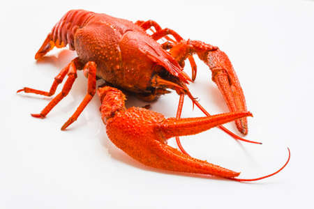 the red lobster on a white background