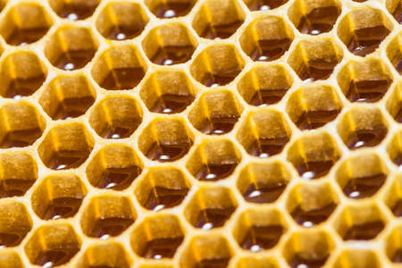 studious: close-up texture of a honeycomb with honey