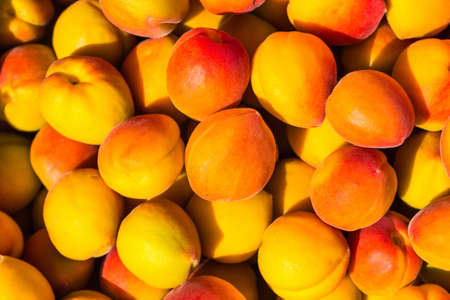 abundant: The long ripe apricot has hung all over the branch, is also an abundant harvest season Stock Photo