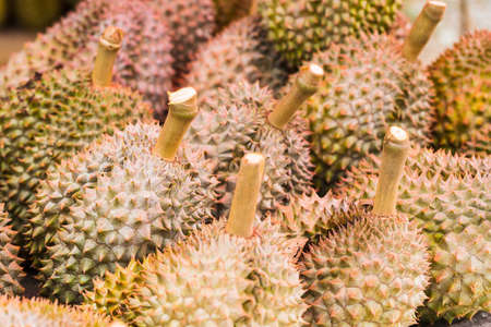 king of thailand: Durian, king of fruit, famous fruit in Thailand