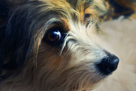 kindly: The small cute dog with kindly eyes