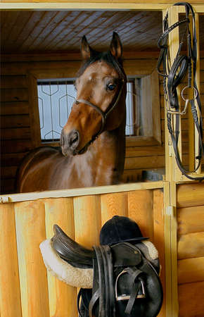 reins: Brown horse in stable door rigged with saddle and reins Stock Photo
