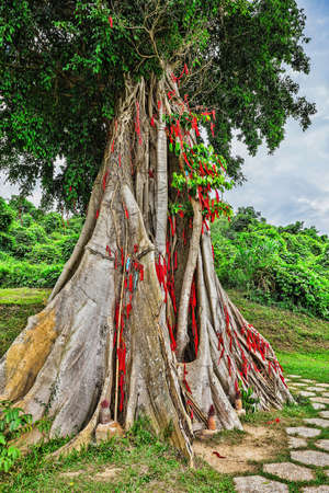 believed: tree with colored ribbons is believed to bring luck. Vietnam Stock Photo