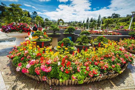 De stad bloementuin in Dalat, Vietnam Stockfoto