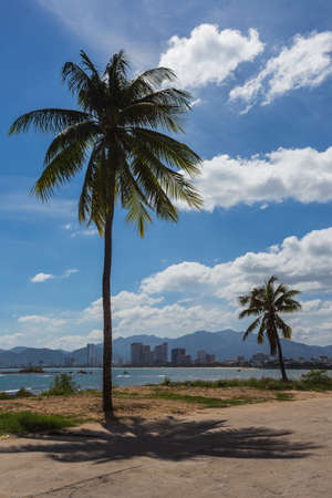 Palm trees on the shore of the sea Stock Photo
