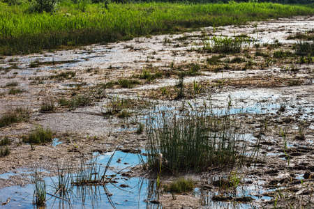 mire: tufts of grass and mire on the silty swamp