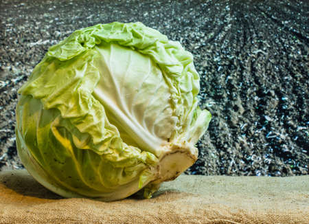 fresh cabbage amid the countryside and fields Stock Photo