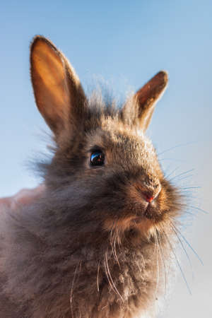 Grey rabbit on a background of blue sky Stock Photo