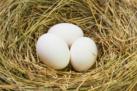 Nest with Easter eggs on the background boards Stock Photo
