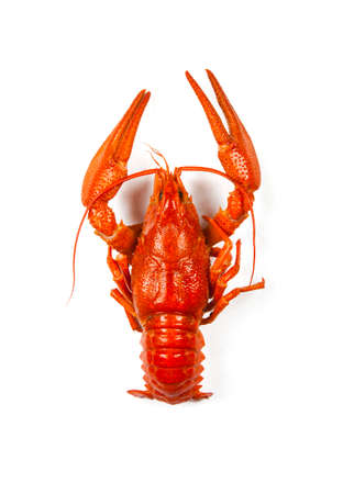 the red lobster isolated  on a white background