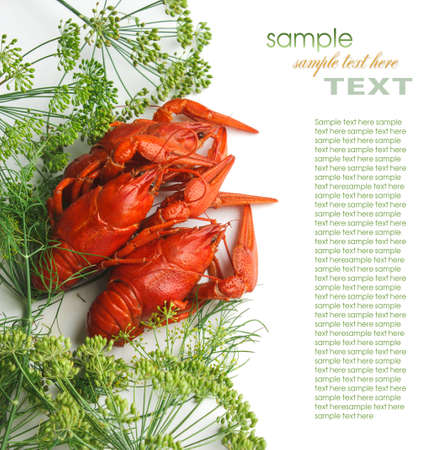 dill: Boiled crayfish with dill isolated on a white background