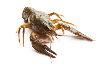 Live crayfish isolated on a white background Stock Photo
