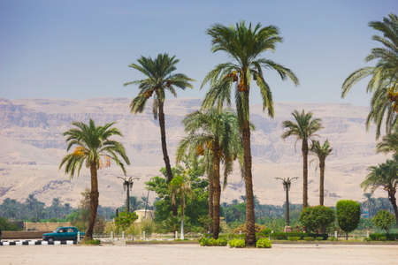 sinai peninsula: Palm trees on the beach in Egypt on the Red Sea